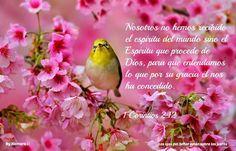 Los ojos del Señor están sobre los justos...1 corintios 2:12