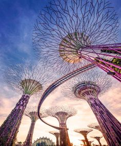 Supertrees in Singapore. If you dont know. Now you do.