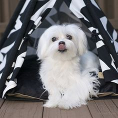 Have a wonderful weekend my furry friends ! Don't forget to eat something delicious this weekend ! Teepee info ▶️ http://www.unitedpups.com/tent1 #maltese #puppylove #doglover #whitedog #dogoftheday #poodle #petlove #shihtzu #puppystagrams #doghouse #mydogiscutest #teepee #tent #petteepee #cuteteepee #frenchie #pomeranian #yorkie #chihuahua #dogbed #unitedpups #maltipom #morkie #pug #style #teepeelife #dachshund #love