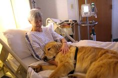 Therapy Dog, Bert, cuddles with Carolyn Becker at Ogden Regional Medical Center.  Photo by: (ERIN HOOLEY/Standard-Examiner)