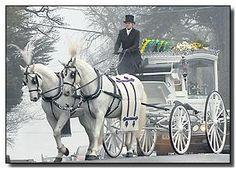 White Horse Drawn Hearse