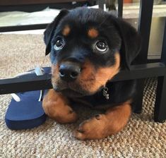 En el Día del Perro: os presentamos a los 11 cachorros más | Newsner