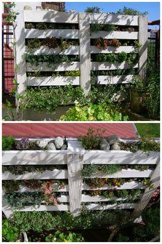 #Garden, #RecycledPallet, #Urban, #VerticalGarden