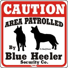 Love blue heelers ♥  Why dont we have one of these?!?