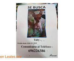PERDIDO EN BARRIO NUEVO LA LAGUNA!!! ℹ  Perdido en Barrio Nuevo La Laguna. Tiene chip.  #Perdido #Encontrado  Contacto y Info: Pulsar la foto o aquí: https://leales.org/perdidos-o-encontrados/perros-perdidos/perdido-en-barrio-nuevo-la-laguna_i3035    Acerca de esta publicación:   Esta publicación NO ha sido creada por Leales.org y NO somos responsables de su contenido.  Ha sido publicada gratuitamente por un usuario en la multiplataforma Leales.org y autodifundida por los servidores en…