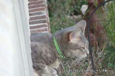 Cat named Faith