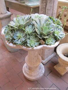 old fountain used as an indoor plant container