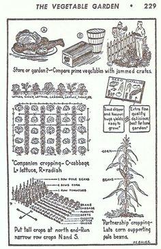 GardenMagicTheVegetableGardenIllus 001 (2)