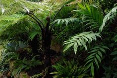 Cool climate tropical looking garden