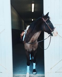 Gem is all ready for her ride! Does anyone want to come?-Kaitlyn