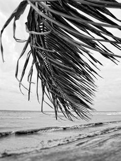 """Tropical B&W Photography """"Everyday is Like Sunday"""" Black and white beach with palm tree. Wall art fo aesthetic Tropical B&W Photography """"Everyday is Like Sunday"""" Black and white beach with palm tree gray wall art. Framable art for grey decor. Gray Aesthetic, Black Aesthetic Wallpaper, Beach Aesthetic, Black And White Aesthetic, Aesthetic Collage, Summer Aesthetic, Aesthetic Fashion, Aesthetic Pastel, Aesthetic Bedroom"""