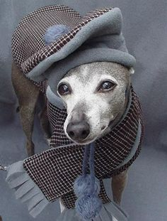 Chocolate Windowpane Wool Dog Coat by spoiledbratzwear, via Flickr