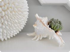 plant a succelent in a shell...great idea for my bathroom