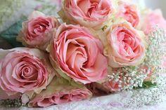 Roses et décors