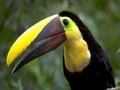 amazone regenwoud dieren - Google zoeken
