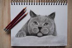 Cat drawing -  #Graphitepencil #pencil #drawing #rysunek #ołówek #grafit #cat #kot #macka