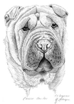 Chinese Shar Pei by ArtByLabrecque on Etsy