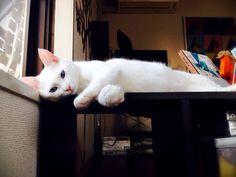 cat あー。。。暑いっ‼︎だるぅーーーい。。。ねむぅーーーい。。。ねこごち↑1日1回のクリックがランキングに反映する仕組みです。今日も楽しんで頂けたら、チャーへ...