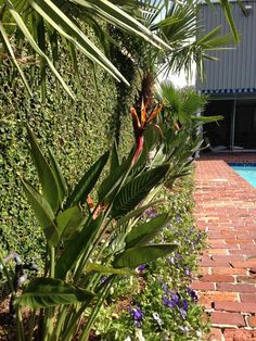 New Orleans Garden Design ponseti landscaping old metairie lakeview and uptown new orleans garden landscaping design and maintenance pinterest Ponseti Landscaping Old Metairie Lakeview Uptown New Orleans Garden Design And Maintenance