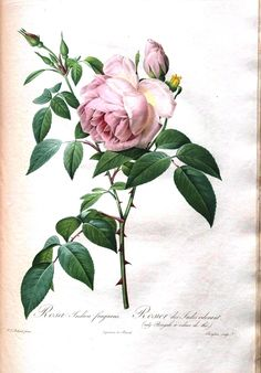 Vintage Printable – Botanical – 7 | Vintage Printable
