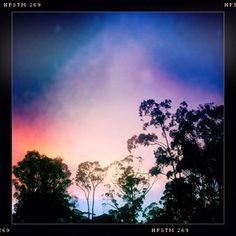 Dusk over the gum trees, Brisbane, Australia
