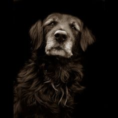 Old and wise. This beautiful dog was placed in a shelter, where this dignified picture was taken.