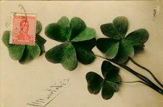 4-leaf clovers