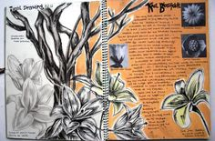 Karl Blossfeldt- sketchbook GCSE