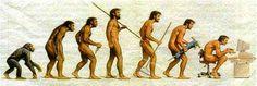 Human evolution.  La evolución humana.