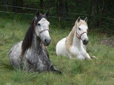 Ruta a caballo los Oscos