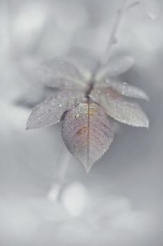 Image about nature in A 𝒲𝒾𝓃𝓉𝑒𝓇 𝓌𝑜𝓃𝒹𝑒𝓇𝓁𝒶𝓃𝒹 ❄️ by 𝓈𝒶𝓂𝒶𝓃𝓉𝒽𝒶 𝓈𝑒𝓇𝑒𝓃𝒶 ✰ Foto Macro, Deco Nature, Perfect World, White Aesthetic, Belle Photo, Wallpaper Backgrounds, Snow Wallpaper Iphone, Aesthetic Wallpapers, Frost