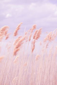 Dreamy Pastel Beach Grass by Poppy Thomas-Hill