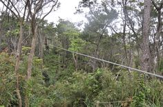 Zip lining in Forest Park, Okinawa, Japan