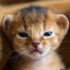 Filhote de leão.!