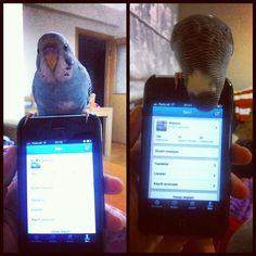 #twit #twitter #instigram