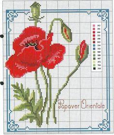 Poppy Flower & Bud with Key Cute Cross Stitch, Cross Stitch Flowers, Cross Stitch Charts, Cross Stitch Designs, Cross Stitch Patterns, Cross Stitching, Cross Stitch Embroidery, Hand Embroidery, Beading Patterns