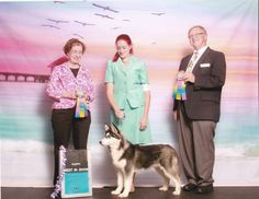 Siberian Husky Puppy, Carbon, taking back to back Best Puppy In Show awards.  Black & white Siberian Husky.