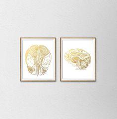 Anatomical Faux Gold Foil Brain Prints. Set of 2 Prints. Vintage Replication Wall Art. Human Brain Print. Brain Anatomy Poster. Scientific.