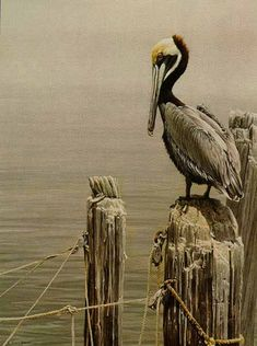 "Wildlife art by Robert Bateman. 20"" x 30"""