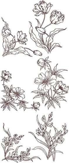 Advanced Embroidery Designs - Redwork Flower Corners and Borders Set