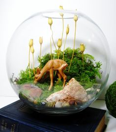 Woodland Bowl Terrarium: Little Fawn