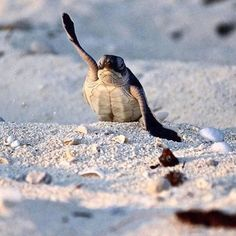 """""""Ooooh! Me! Me! Me!"""" The reaction when you're part of our#dontwasteyoursummer contest. Win a plastic free starter kit by sharing your photo and tag it with @oceanfilmtour and #dontwasteyoursummer. Find further details on oceanfilmtour.com (Link in Bio) #turtletuesday #turtle #oceanfilmtour #oceanlovers #plasticdetox"""