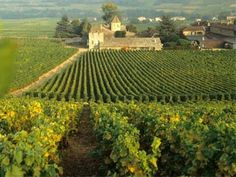 Information on ecotourism in France, evolution of green tourism, places to go to for green holidays in France Aquitaine, Brittany France, French Property, France Europe, In Vino Veritas, Corsica, Serenity, Vineyard, Places To Go