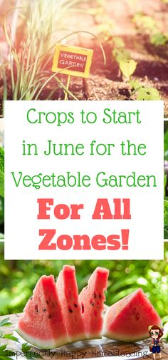 Crops to Start in June for Your Summer Vegetable Garden - all zones! Simple guide for backyard farmers, gardeners and homesteaders.
