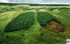 Forests are the earth's lungs. Without them we cannot breathe. (via @pafushi Action