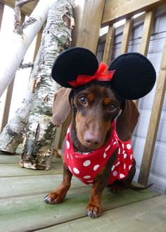 Paisley [as Minnie Mouse]