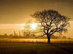 40 Outstanding Golden Hour Photos for Your Inspiration « The Photo Argus The Photo Argus