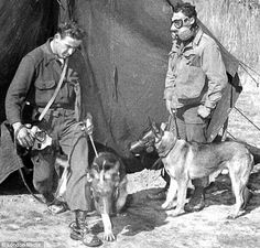 These Alsatian dogs played a major role in WWII. These images reflect gas masks used for canines during their service in the war! Notice the British patrol officers with them!