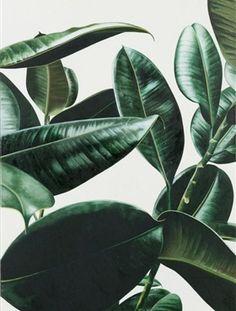 Interieurtrend: Planten - Residence