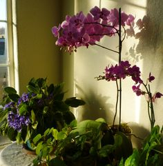 Orchids, Violets and Creeping Charlie enjoy the morning sun.